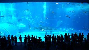 美ら海水族館(ちゅらうみすいぞくかん) 黒潮の海(くろしおのうみ)