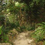備瀬のワルミ(びせのわるみ)聖域へ下る階段