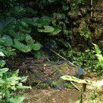 備瀬のワルミ(びせのわるみ)の階段横の井戸