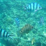青の洞窟(あおのどうくつ)の魚達