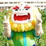 ひまわり IN 北中城のマスコット