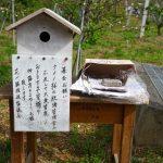 本部町伊豆味・クメノサクラ(くめのさくら)募金箱