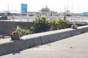 奥武島(おうじま)猫の昼ね