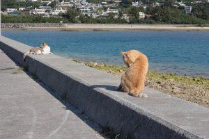 奥武島(おうじま)海岸沿いの猫