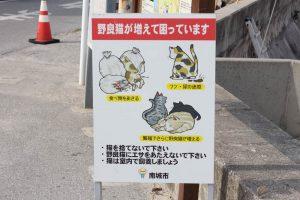 奥武島(おうじま)野良猫看板