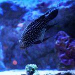 沖縄美ら海水族館(おきなわちゅらうみすいぞくかん)黒い魚