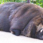 沖縄の動物園 ミニミニ動物園 ぶたさん