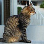 沖縄瀬長島(おきなわせながじま)の猫