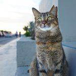 沖縄瀬長島(おきなわせながじま)のうみかじてらすの猫