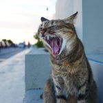 沖縄瀬長島(おきなわせながじま)のウミカジテラス猫のあくび