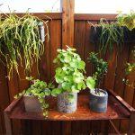 WINGLAP(うぃんぐらっぷ)テラスの植物