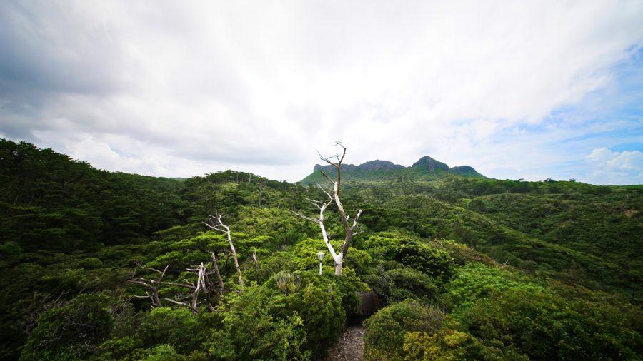 辺戸岬のヤンバルクイナ展望台(やんばるくいなてんぼうだい)からみる後ろの風景