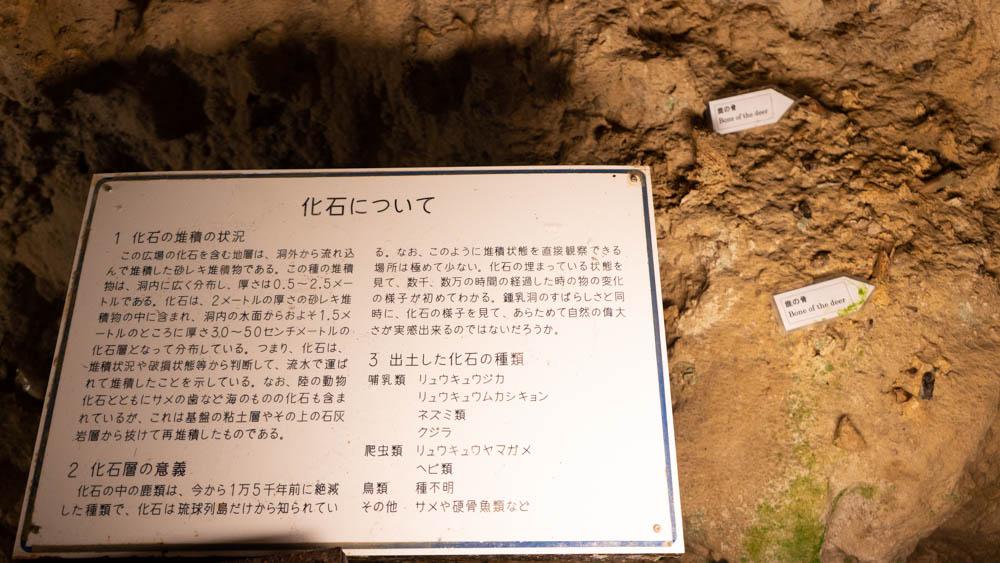 玉泉洞化石