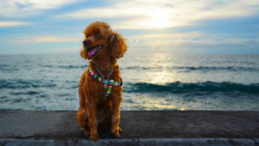 沖縄写真 愛犬ティナちゃん