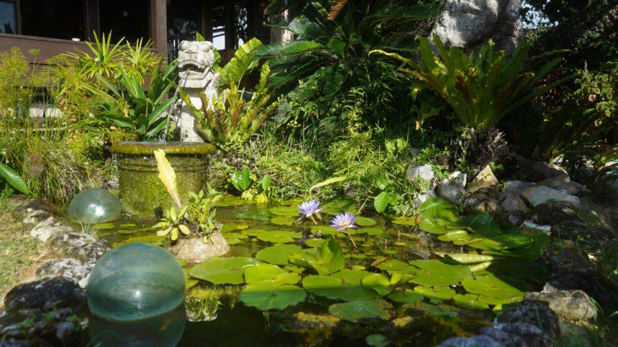 亜熱帯茶屋(あねったいちゃや) 小さな池