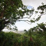 富盛の石彫大獅子(ともりのいしぼりうふじし)休憩場からの風景
