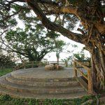 富盛の石彫大獅子(ともりのいしぼりうふじし)休憩所とガジュマル