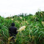 古宇利島のスルル洞の生い茂る草