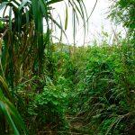 古宇利島のスルル洞の道
