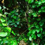 古宇利島のスルル洞の草におおわれた道