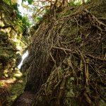 浜川御嶽(はまがわうたき)自然の根