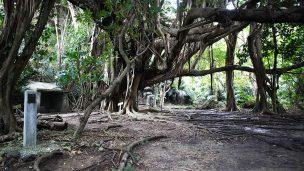 東の御嶽(あがりのうたき)シヌグ堂 の大きなガジュマルの木
