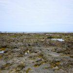 玻名城ビーチ(はなしろびーち) 岩だらけ