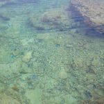 玻名城ビーチ(はなしろびーち)青い魚