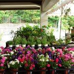 わんさか大浦パーク(わんさかおおうらぱーく)の花売り場