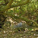 塩川 国指定天然記念物(しおかわ くにしていてんねんきねんぶつ)風景