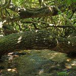 塩川 国指定天然記念物(しおかわ くにしていてんねんきねんぶつ)流れる水