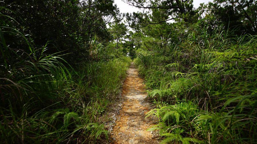 ジュゴンの見える丘(じゅごんのみえるおか)細道