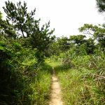 ジュゴンの見える丘 絶景までの道