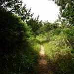 ジュゴンの見える丘(じゅごんのみえるおか)生い茂る草木