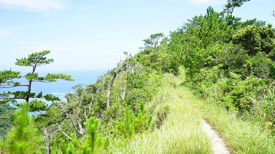 ジュゴンの見える丘(じゅごんのみえるおか)道なりの風景