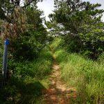 ジュゴンの見える丘(じゅごんのみえるおか)細い道