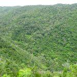 ジュゴンの見える丘(じゅごんのみえるおか)沖縄の大自然