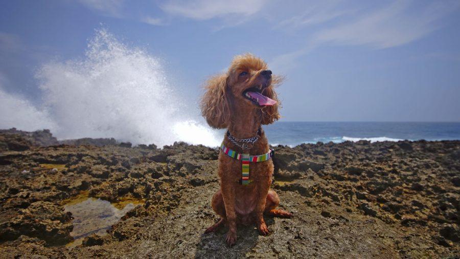 Cape Arasaki(けーぷ あらさき)愛犬と波しぶき