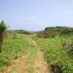 Cape Arasaki(けーぷ あらさき)への道