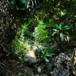 伊計島(いけいじま)セーナナー御嶽 せーななーうたきのおすすめ最新観光情報